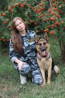 Дрессировка собак, в Екатеринбурге