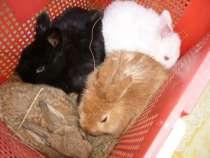Кролики, в Екатеринбурге
