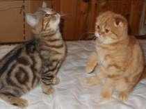 Британские котята яркие мраморные ,5окрасов тебби ,шоу-класс, в Москве