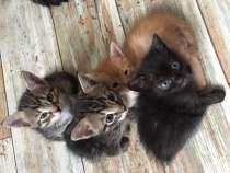 Котята в добрые руки, в Казани