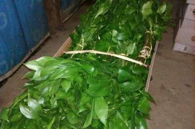 Рускус дешевле цены Краснодарского опта в Набережных Челнах Фото 3