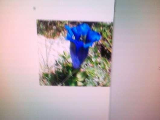 Синее чудо