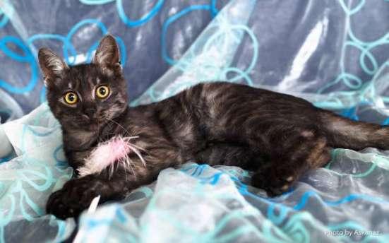 Шикарный кот Митчелл черный дым - молодой котик ищет дом