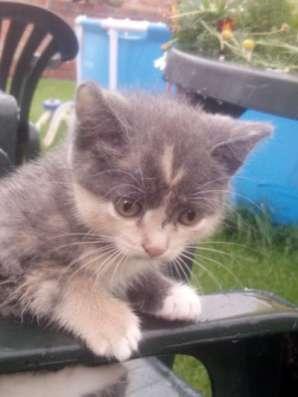 Отдам даром Милые котята в хорошие руки