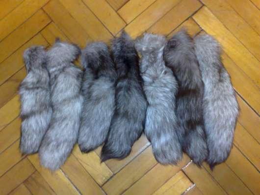Куплю Натуральные хвосты от рыжей лисы