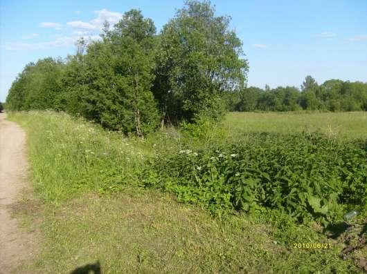 4.1 га земли сельхоз.назначения в 10 км от Углича Яросл. обл Фото 3