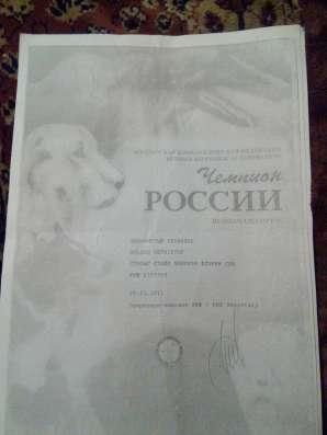 У нас родились малышки голден ретривер в Москве Фото 2