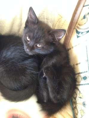 Котята в добрые руки! в Дубне Фото 2
