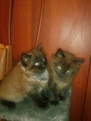 Два котенка, ищет своих хозяев