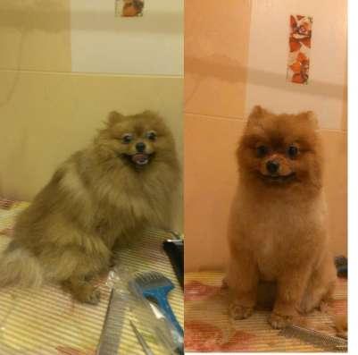Стрижка собак и кошек в Витебске