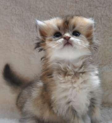 Удивительные котята в г. Белореченск Фото 3