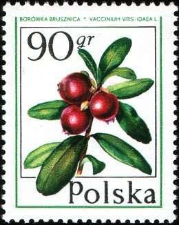 Марки 50gr 90gr Польша 1977 год Лесные ягоды