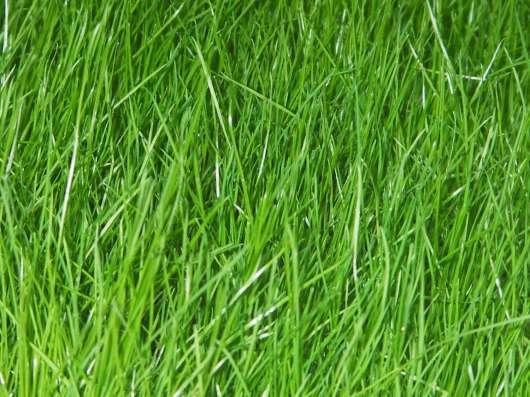 Трава Газонная - Канада Грин. Canada Green. Grass Seed