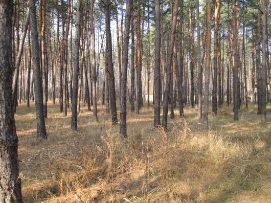 Продам участок в лесу!