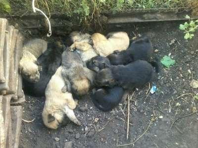 Отдам даром Дарим щенят. в Набережных Челнах Фото 3