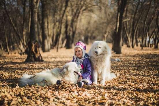 Самоедская Лайка в Астрахани Фото 2