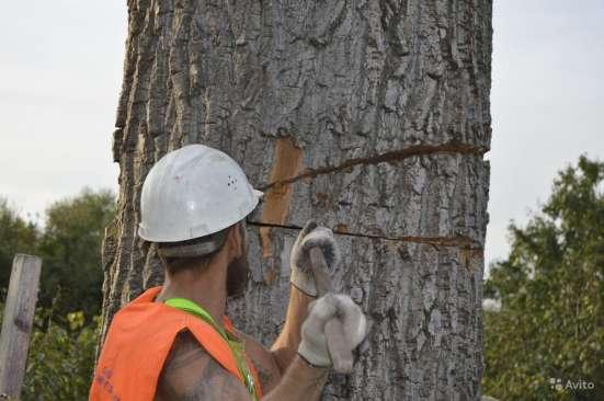 Удаление деревьев в Электростале Фото 1