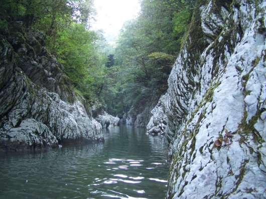 Индивидуальная экскурсия в тисо-самшитовую рощу в Сочи Фото 4