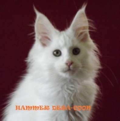 Котята мейн-кун в Таганроге Фото 2
