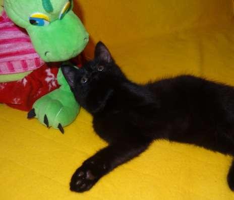 Котята в добрые руки в Тюмени Фото 3