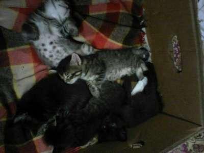 Отдам даром отдам котят в добрые руки в Перми Фото 1